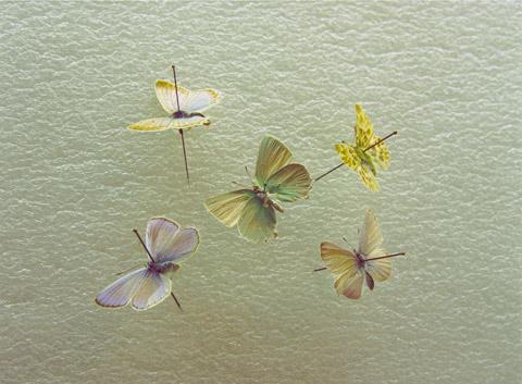 Namiko Kitaura photography
