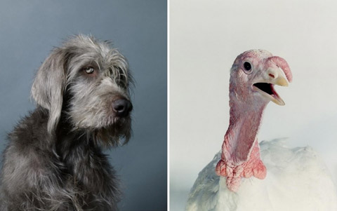 Dan Burn Forti photography animals