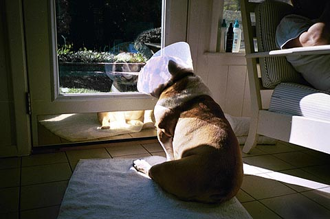 e-collar dogs Keith Davis Young photography