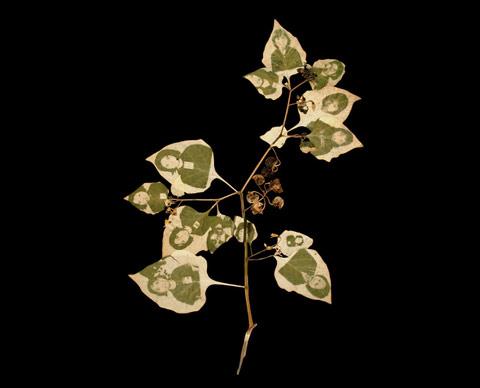 chlorophyll printing binh danh