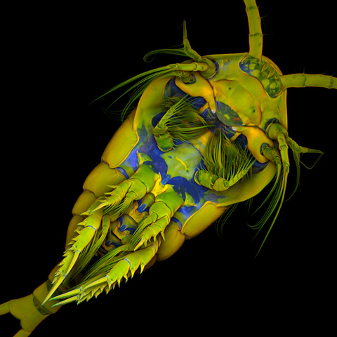 Jan-Michels Nikon Small World photography competition