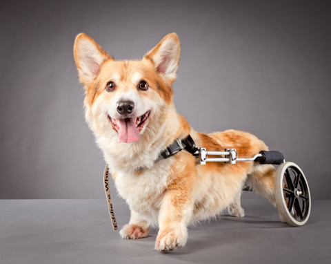 disabled-pets-Carli-Davidson