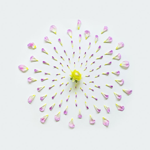 Exploding-flowers-Qi-Wei