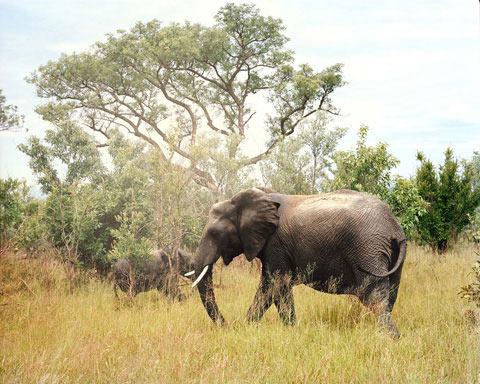 South-African-safari Chris Davis