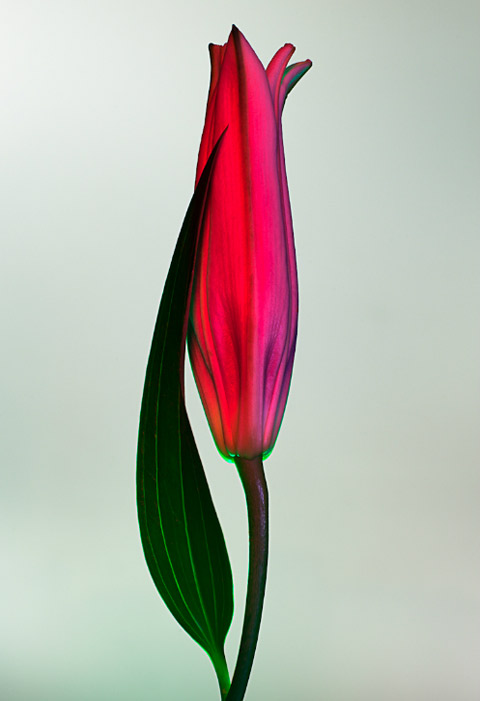 Torkil Gudnason flowers photography