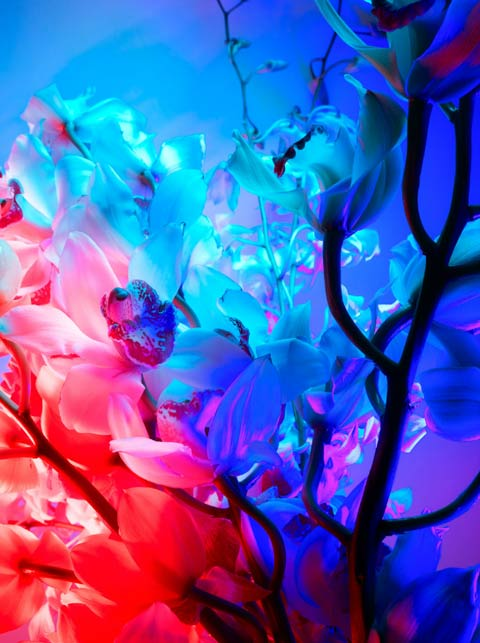 Torkil Gudnason flowers photography