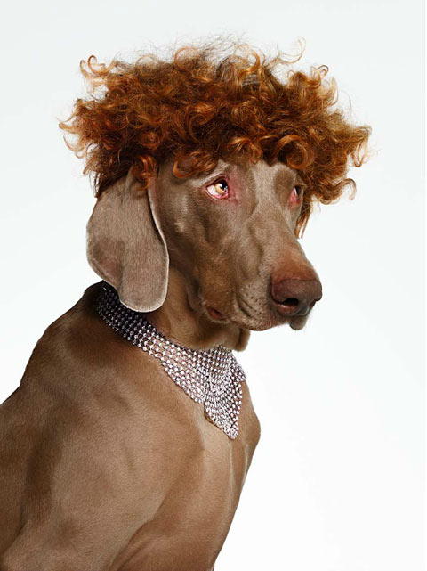 bourjois dogs Torkil Gudnason