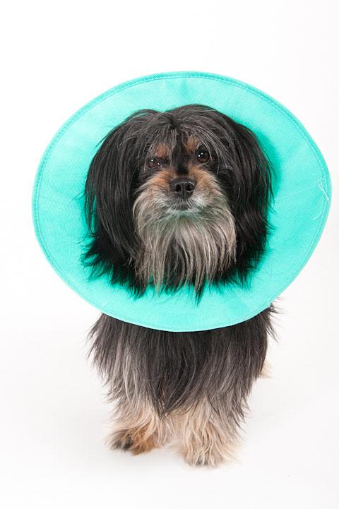 e-collar-dogs-toto-photo
