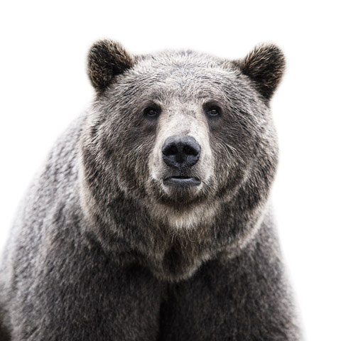 Bear Morten-Koldby photography