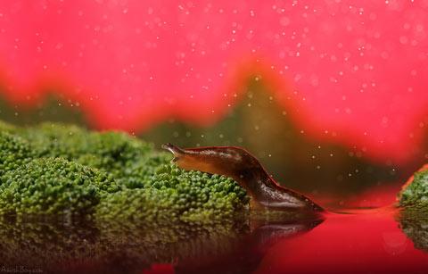 macro photography insects Nadav Bagim