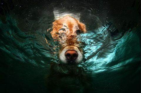 underwater dog photography Seth Casteel