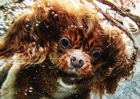 underwater dog photography Seth Casteel