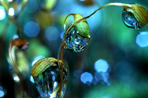 dew drop macro photography Sharon-Johnstone