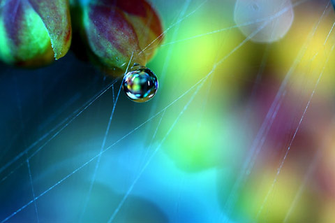 dew drop macro photography Sharon-Johnstone