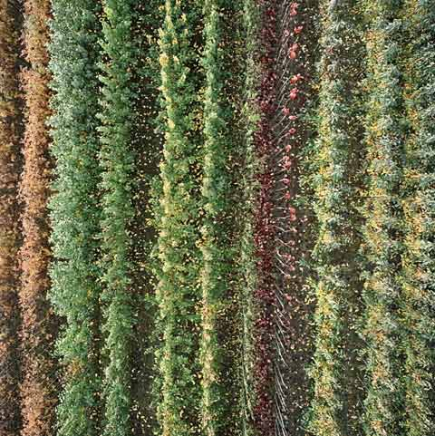 tree-farm Gerco de Ruijter photography