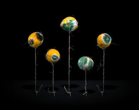 rotting lemons Klaus-Pichler7