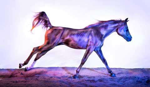 wild horses Andrew-McGibbon photography