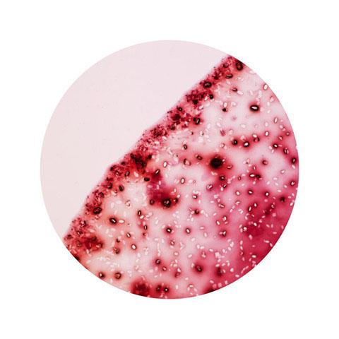 Wine electron microscope William LeGoulion photography