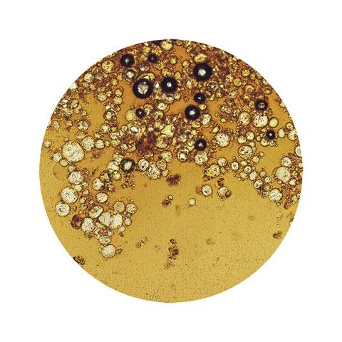 coffee electron microscope William LeGoulion photography