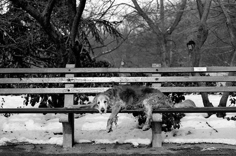senior dogs Nancy-LeVine photography