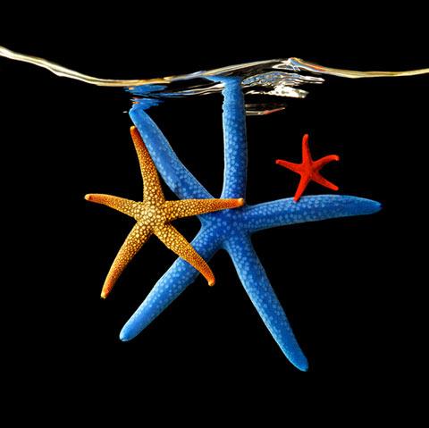 starfish Mark Laita