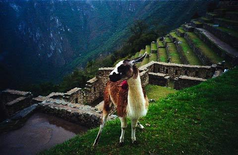 Alex-Brown-Macchu-Picchu