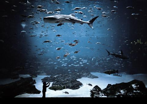 The Whale Shark Tank, Atlanta, GA by Kyle Ford