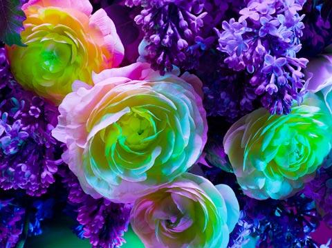 Torkil-Gudnason flower photography