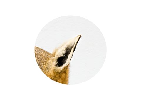 taxidermy cynthia nudel