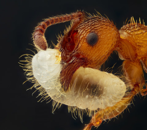 nikon small world competition