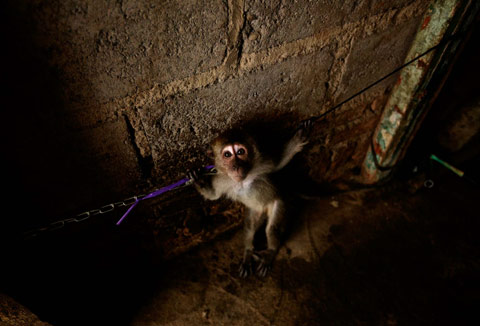 Indonesia monkey Ed-Wray photography