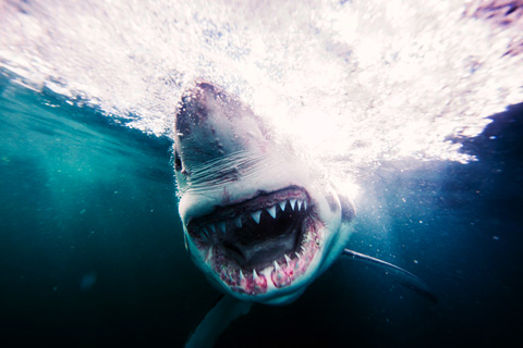 Fearless Photographer Michael Muller Discusses Swimming with Sharks
