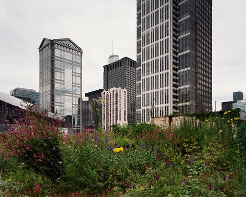 City Hall Chicago Rooftop Garden