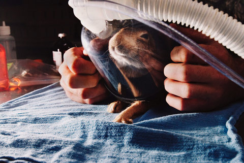 annie-marie-musselman finding trust
