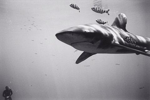 Wayne-Levin underwater photography