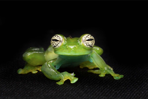 Endangered Frogs of Ecuador Photographed by Peter Lipton