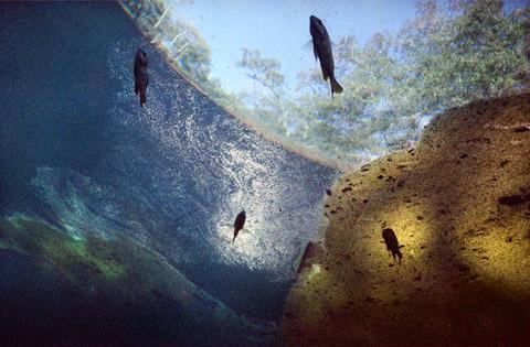 Photographer Documents Florida's Enchanting Yet Fragile Underwater Ecosystem