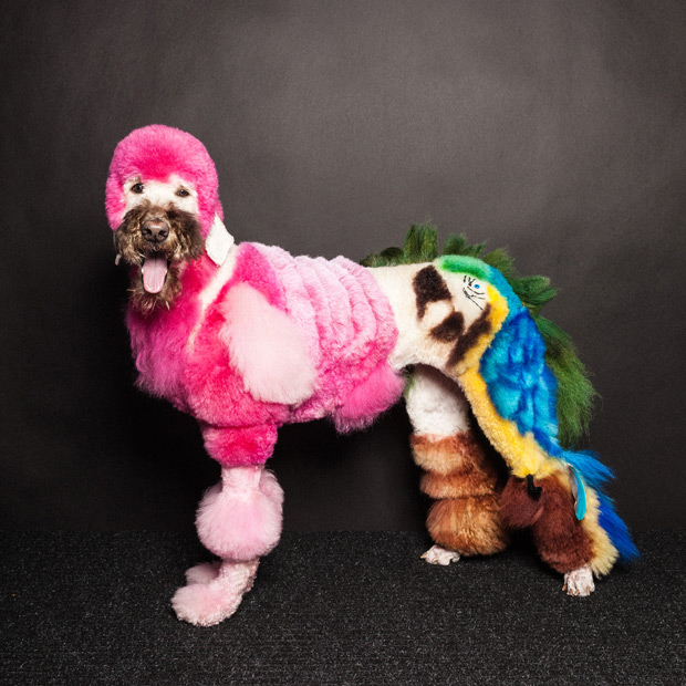 Dogs Gone Wild: Photos of \'Creative\' Fur Styles at A New Jersey Dog ...