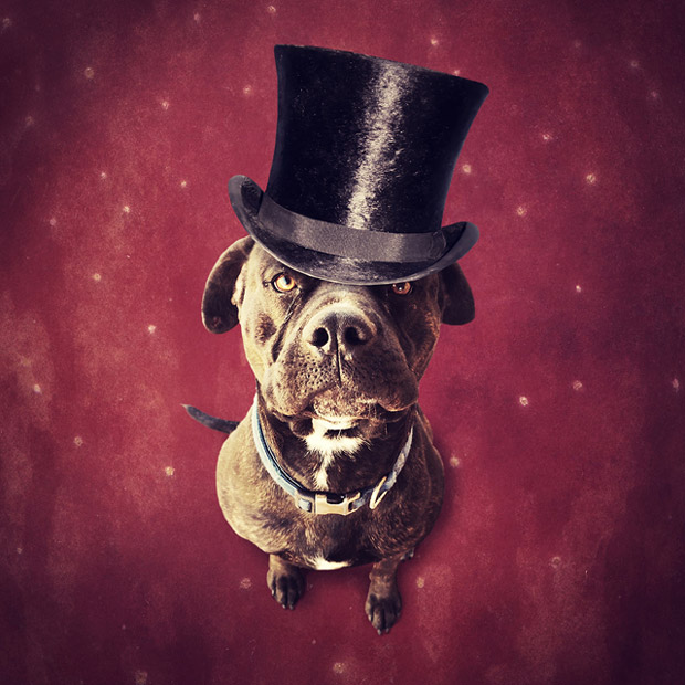 A Vision of Hope: Shelter Animals Star in Magical Photo Montages