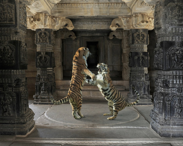 India's Animal Kingdom: Portraits of Wild Beasts In Ornate Palaces