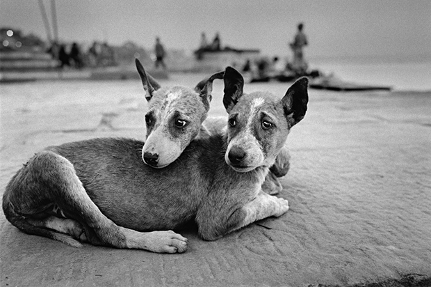 Shot Over 20 Years, Photos Portray an Endearing Array of Animal Emotions