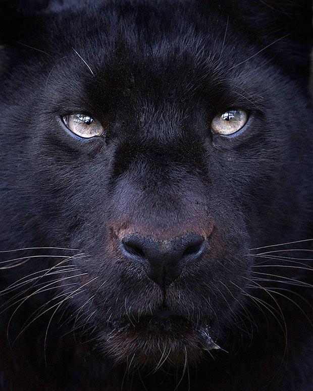 The Piercing Gaze of Wild Animals Photographed by Sue Demetriou