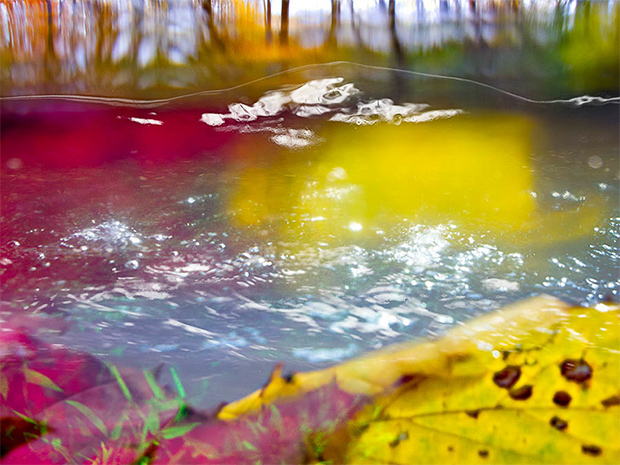 Submerged in a River, Photographer Captures Stunning, Painterly Images