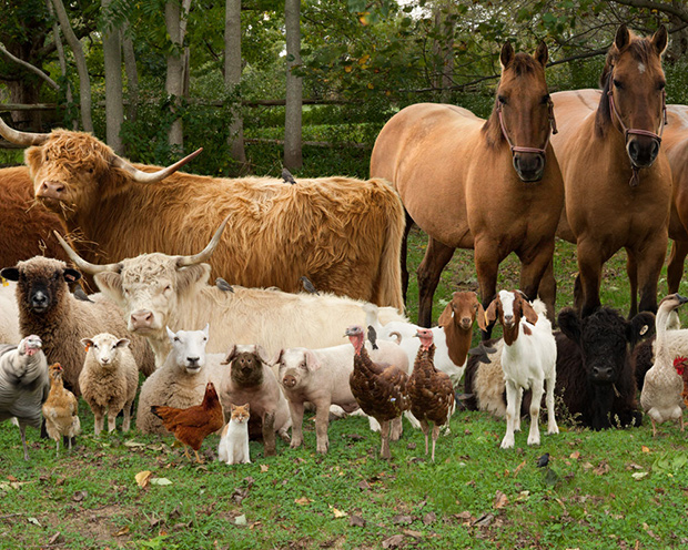 Real farm animals together - photo#1