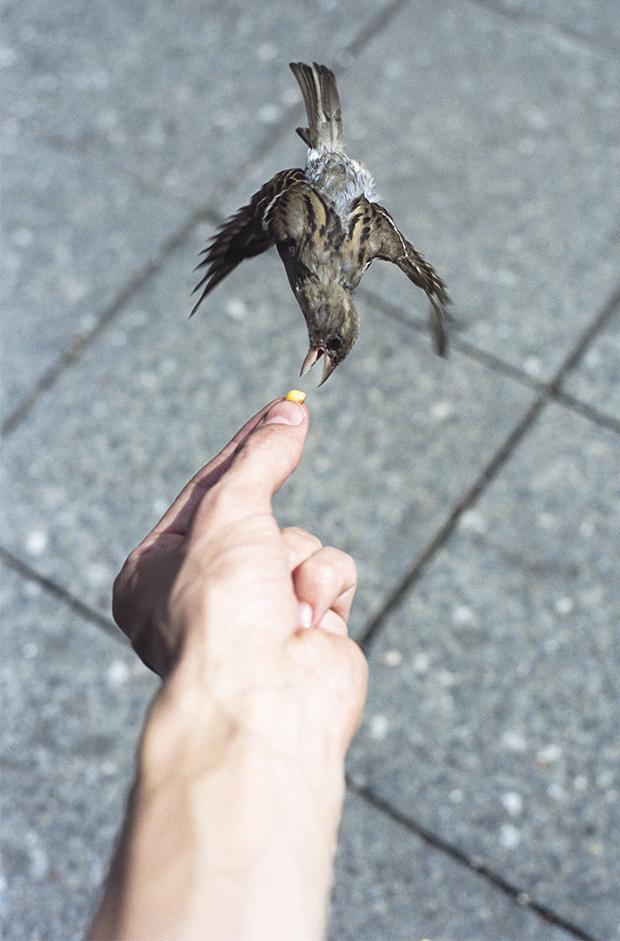Photo Du Jour: This Bird Must Be Italian