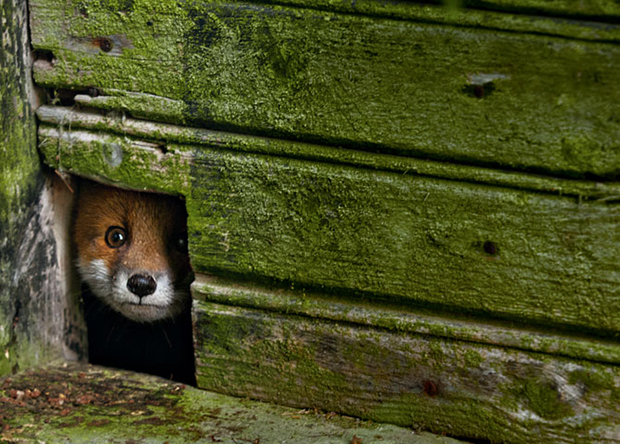 Magical Photos of Abandoned Homes Inhabited by Wild Animals