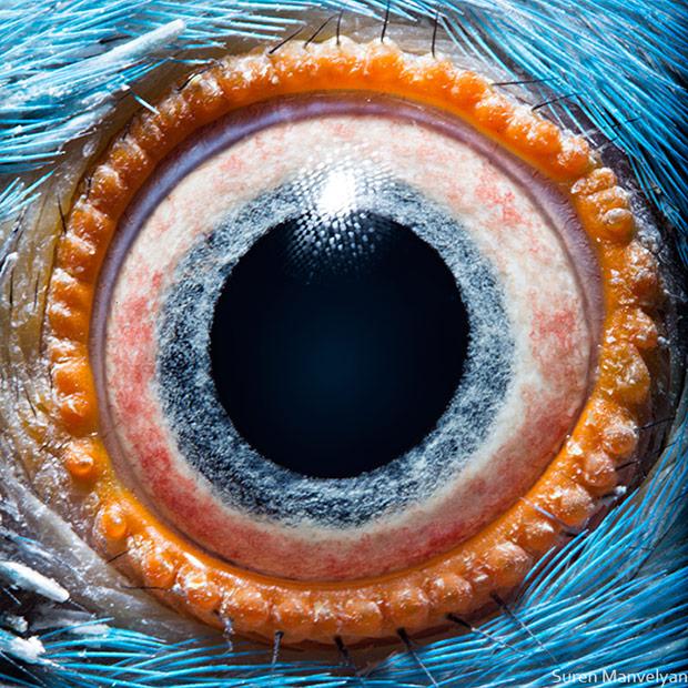 Eyemazing: Macro Photos of Animals' Eyes
