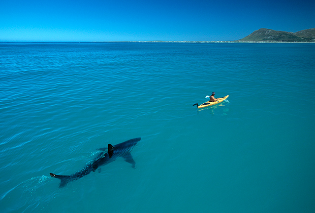 Thought Provoking Photographs Examine Our Complicated Relationship with Sharks