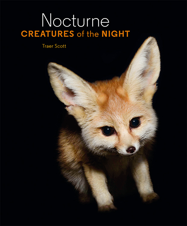creatures of the night photos capture the wonder of