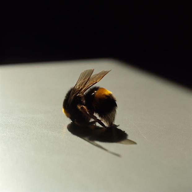 Photo du Jour: The Fallen Bee